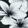 �.FLOWER GREY COMPOSITION 75X75